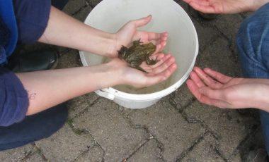 Žabe svatbo so imele …